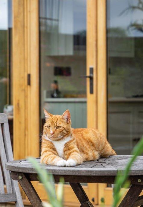 Oak framed garden room featuring cat cameo